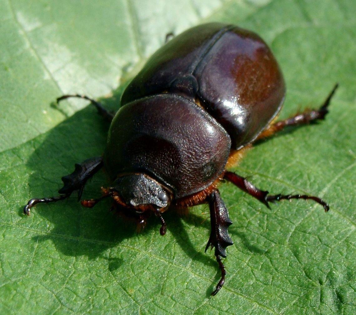 Maqueter a 03 conceptos estructurales b sicos mvblogmvblog - Insectos en casa fotos ...